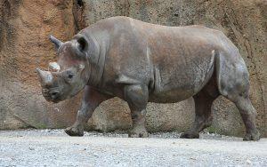 Rhinoceros Crack With License Key Free Download 2021